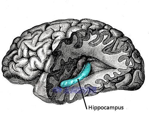 伦敦大学学院重大发现,CBD对老年痴呆的重要作用